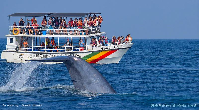5. Whale watching to spot blue whales, The Surfer - The best surfing and yoga retreat in Sri Lanka and South Asia.